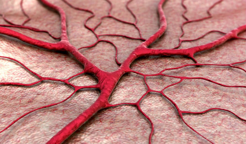 Blood vessel