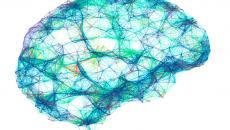 Brain wireframe illustration.