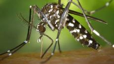 Zika test infection