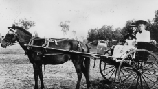 horse-and-buggy
